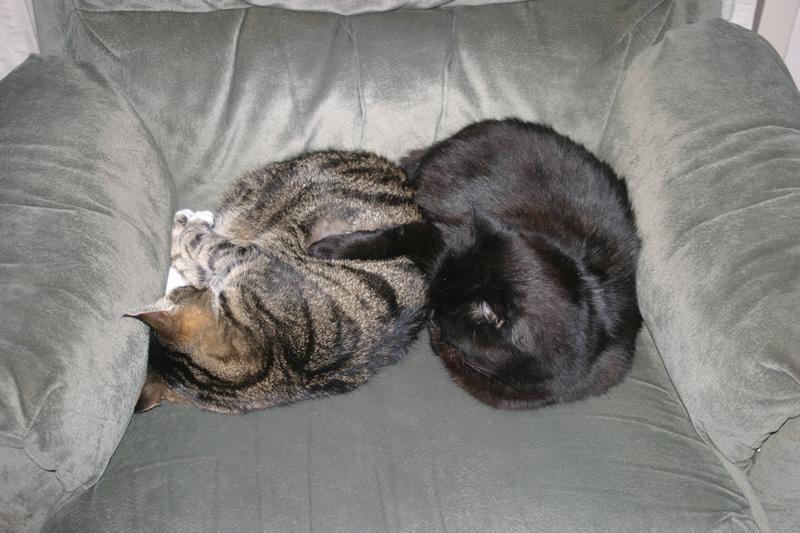 Lizzy en Sidni